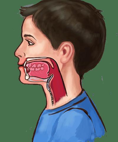 Masticación y Deglución