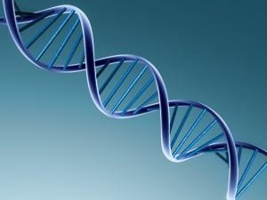 Dos nuevos estudios revelan por qué algunas personas son más propensas que otras a ganar peso y señalan 140 posiciones del genoma relacionadas con esta enfermedad.