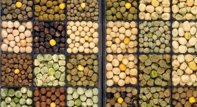 La leguminosa, facilita la descomposición de proteínas en aminoacidos.