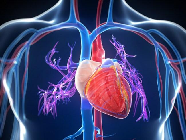 Este estudio ofrece una nueva oportunidad para entender cómo se desarrolla la hipertensión pulmonar y, con esto, buscar nuevas maneras de tratar esta enfermedad.