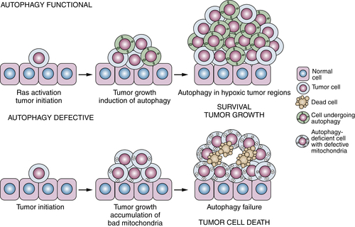 Apoptosis, Necrosis, and Autophagy | Clinical Gate