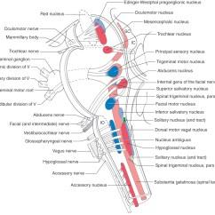 Facial Trigeminal Nerve Diagram Ip Camera Wiring Motor Nucleus Impremedia