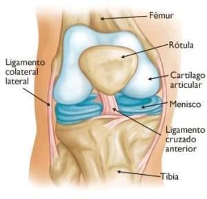 componentes de la rodilla