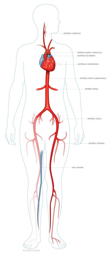 Anatomia do Sistema Cardiovascular