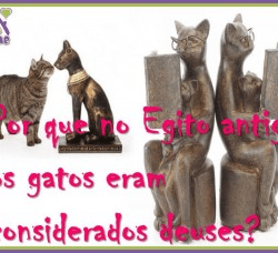 Gatos Egito