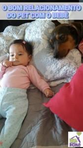 Relacionamento Pet Bebê