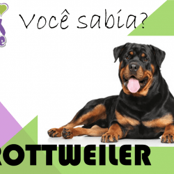 Você Sabia Rottweiler