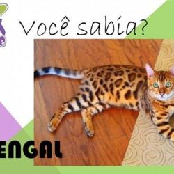 Voce Sabia Bengal