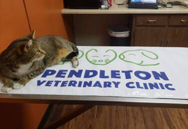 Pendleton Veterinary Clinic Hours