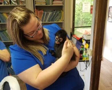 Greenbrier Animal Clinic Services