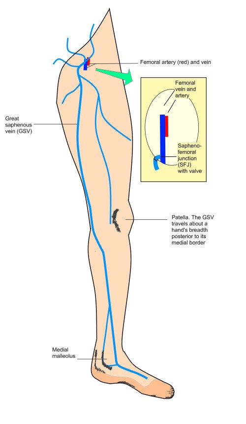 small resolution of great saphenous vein diagram