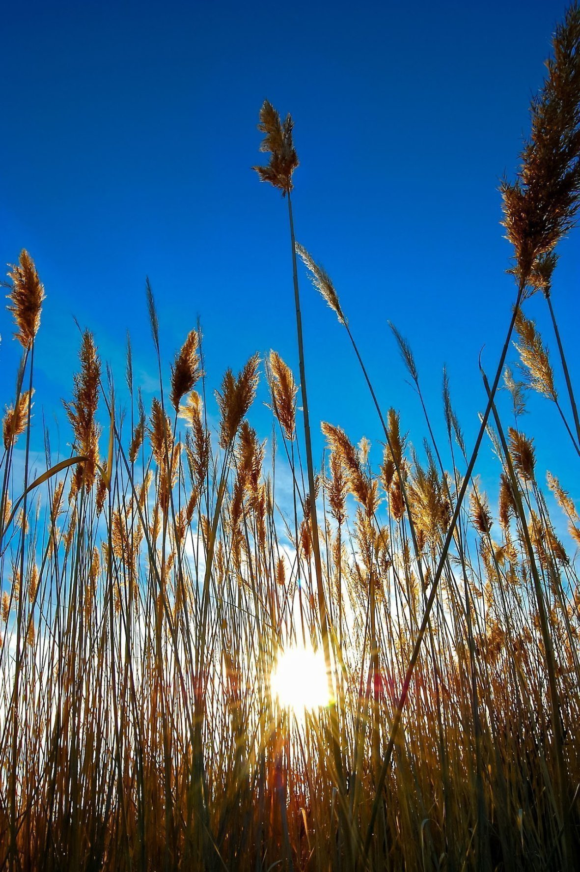 Sunlight through the reeds of Utah Lake