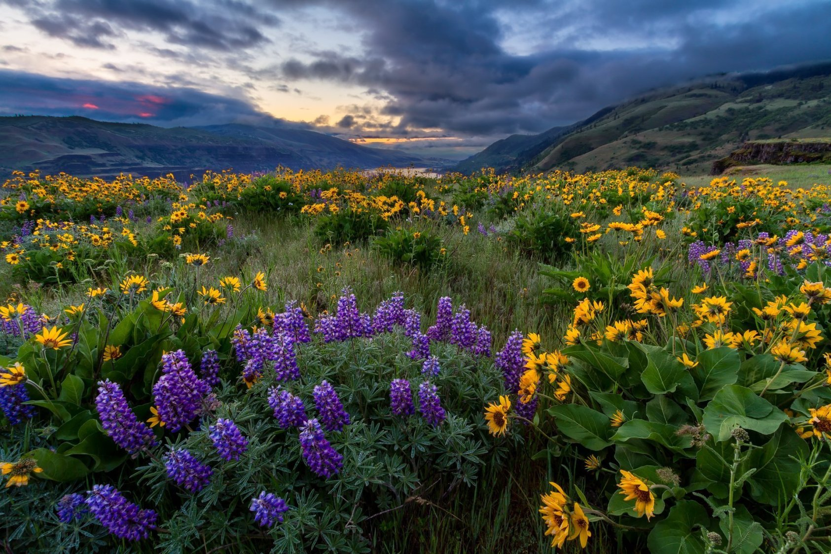 Rowena Spring Sunrise - Oregon Landscape Photography