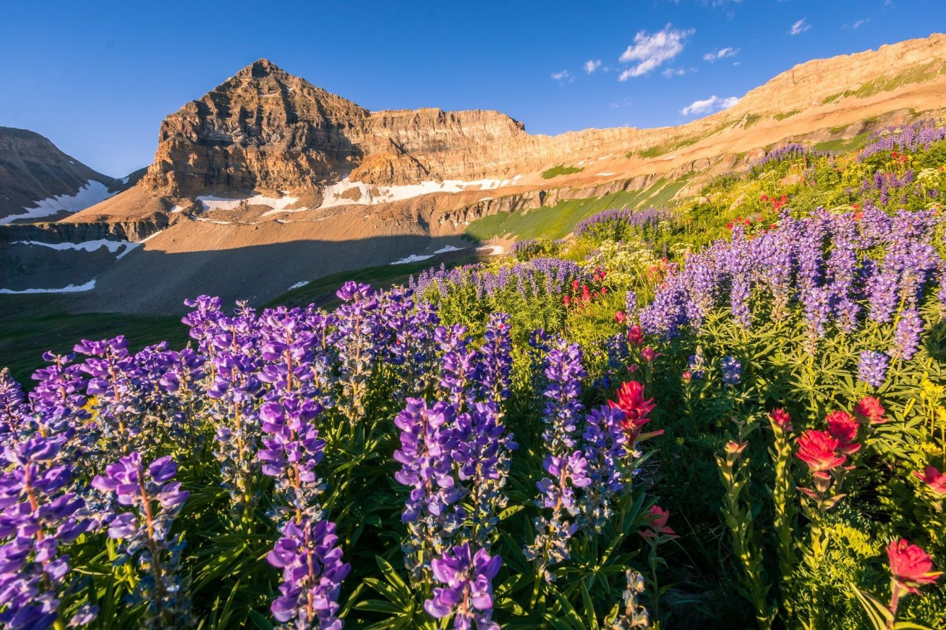 Timpanogos Bloom - Utah Landscape Photography