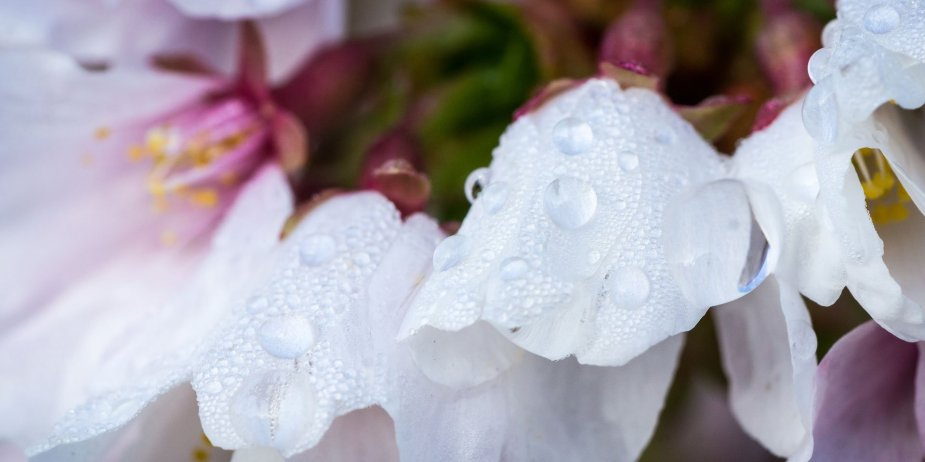 Morning Dew Flower Photography