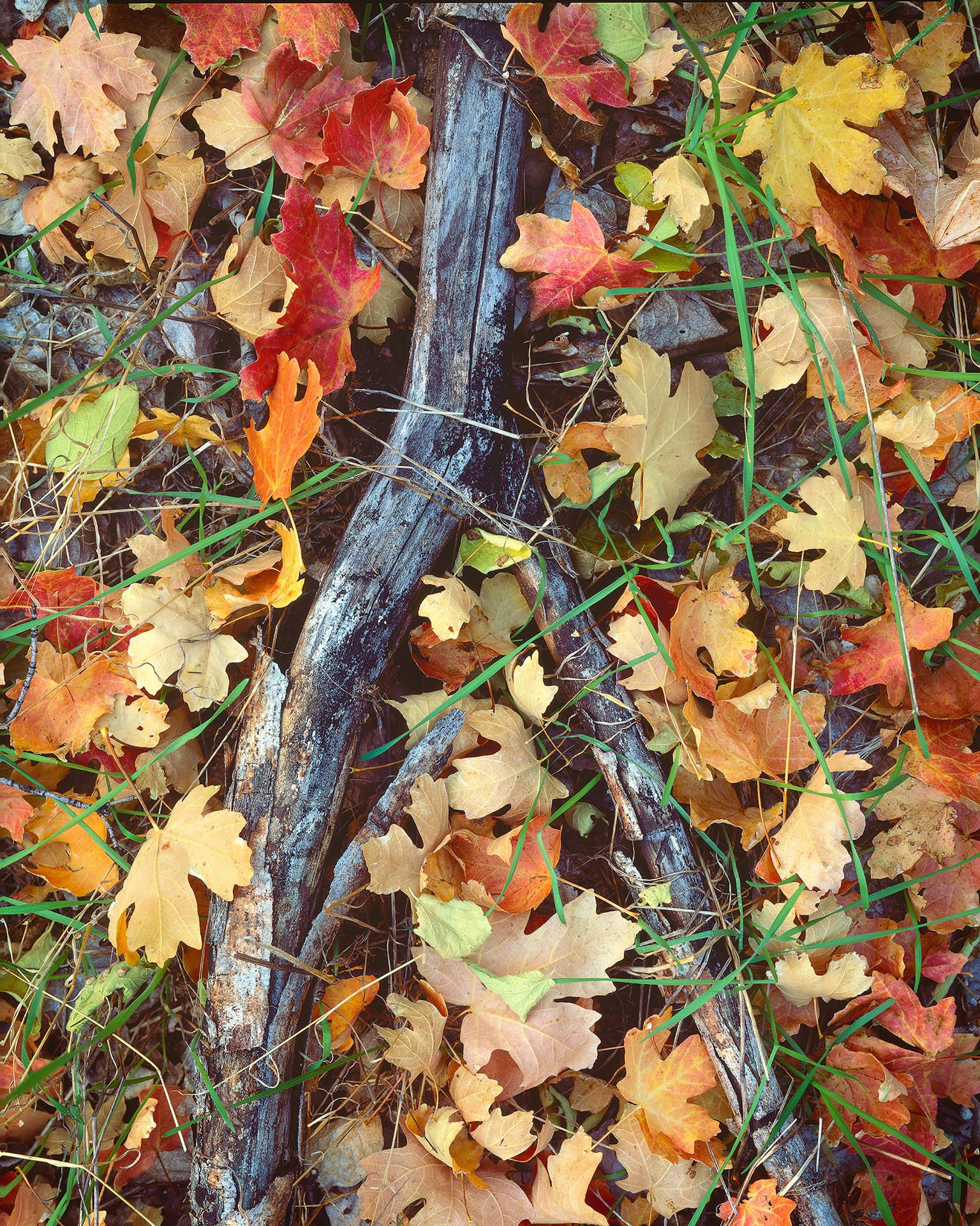 Large Format Film Landscape Photography Journey in Zion National Park