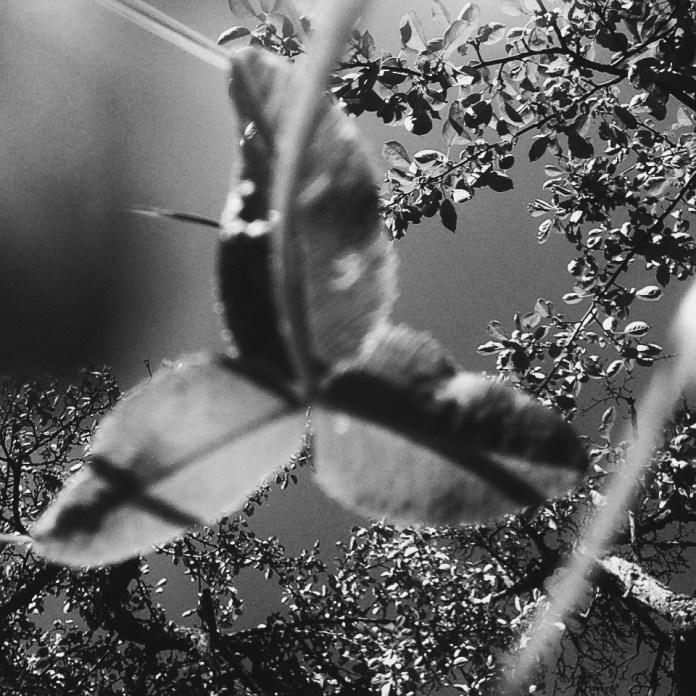 giant clover | clio em