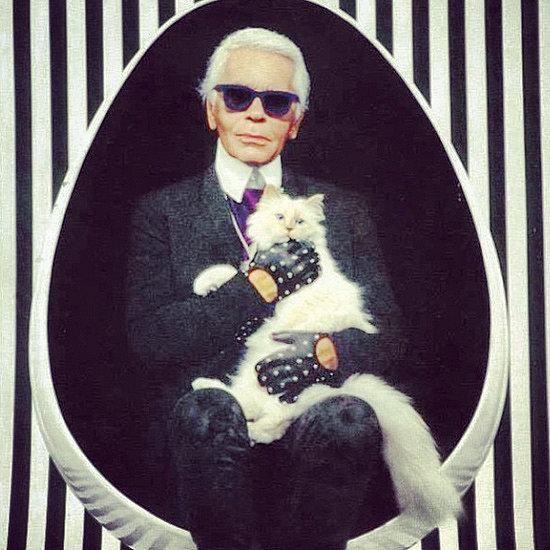 un gatto fortunato: Choupette pare abbia a disposizione tutti i giorni un'estetista personale, due colf, uno chef e persino una community manager che gestisce il suo profilo Instagram! :D
