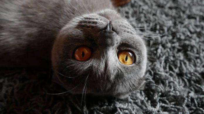 Cliomakeup-occhi-rari-8-gatto-occhi-ambra