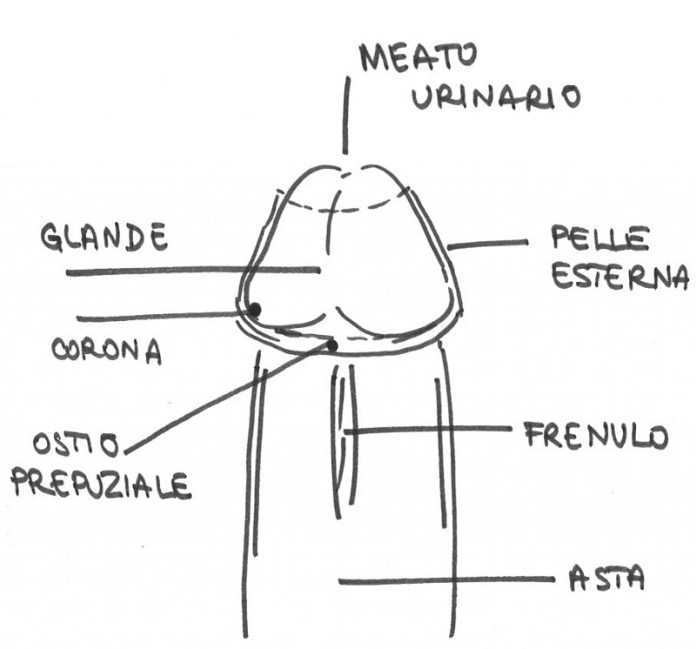 cliomakeup-fellatio-sexy-chupa-chupa-8-pene-anatomia