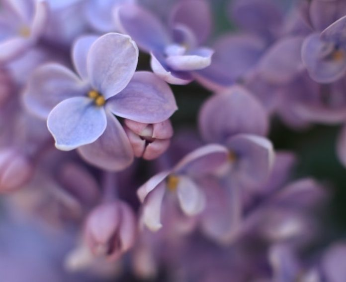 cliomakeup-colore-lilla-primavera-estate-2020-teamclio-fiori