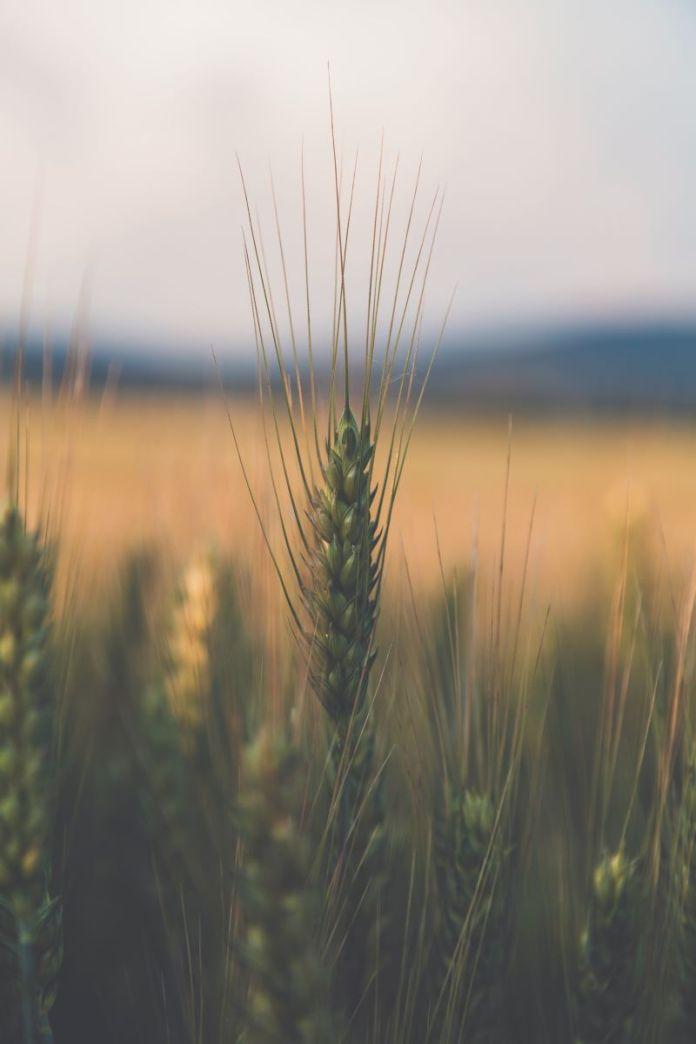 Cliomakeup-cereali-integrali-7-cereali