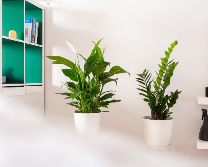 cliomakeup-piante-appartamento-12-spata