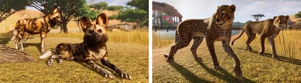 Zoo_life4