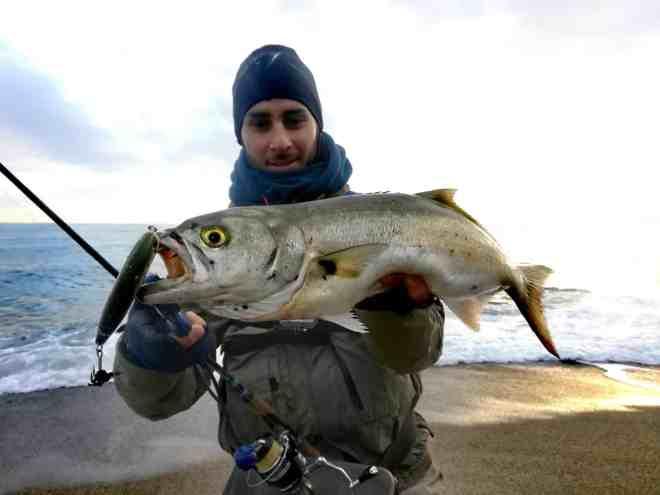 pesce serra pescato a spinning in mare con artificiale a galla