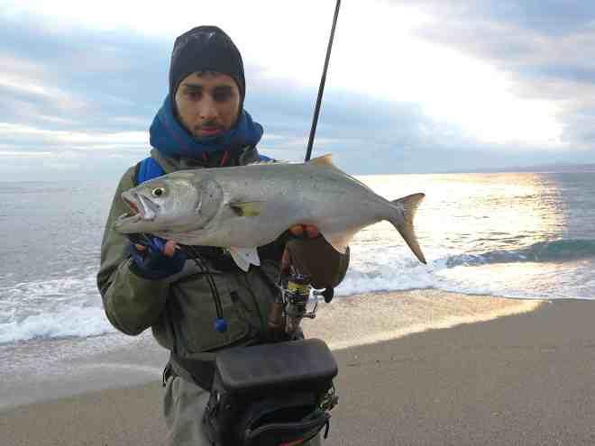 pesce serra preso a spinning in mare