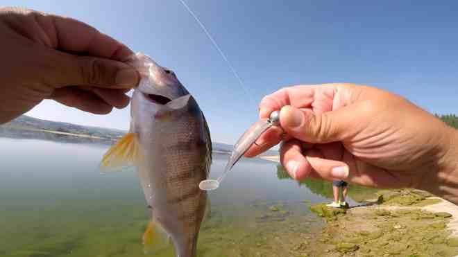 soft bait AMLUCAS