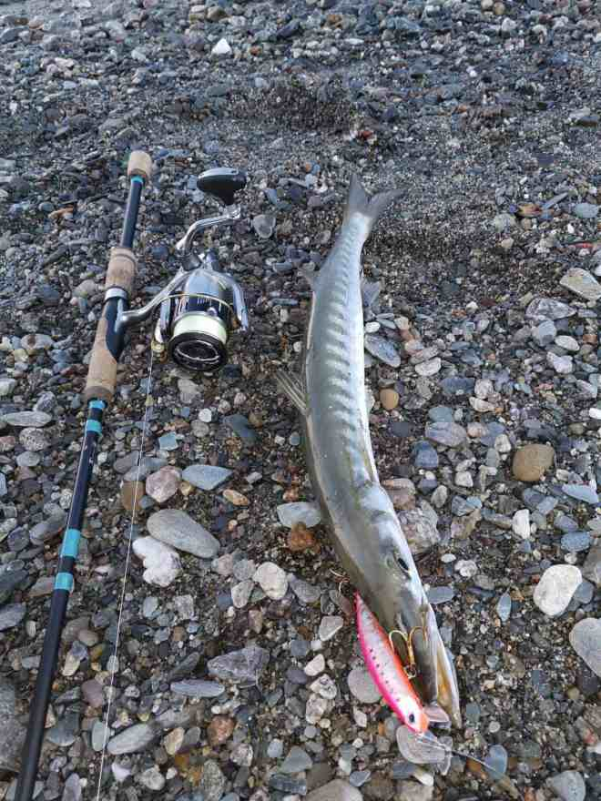 barracuda su long jerk tide minnow 140
