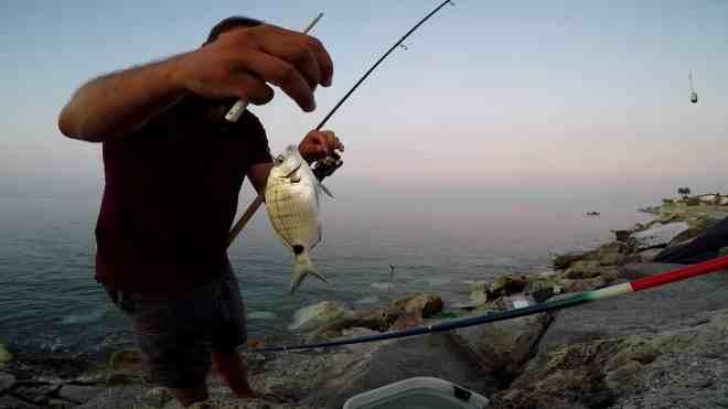 sarago a feeder fishing dalla scogliera artificiale