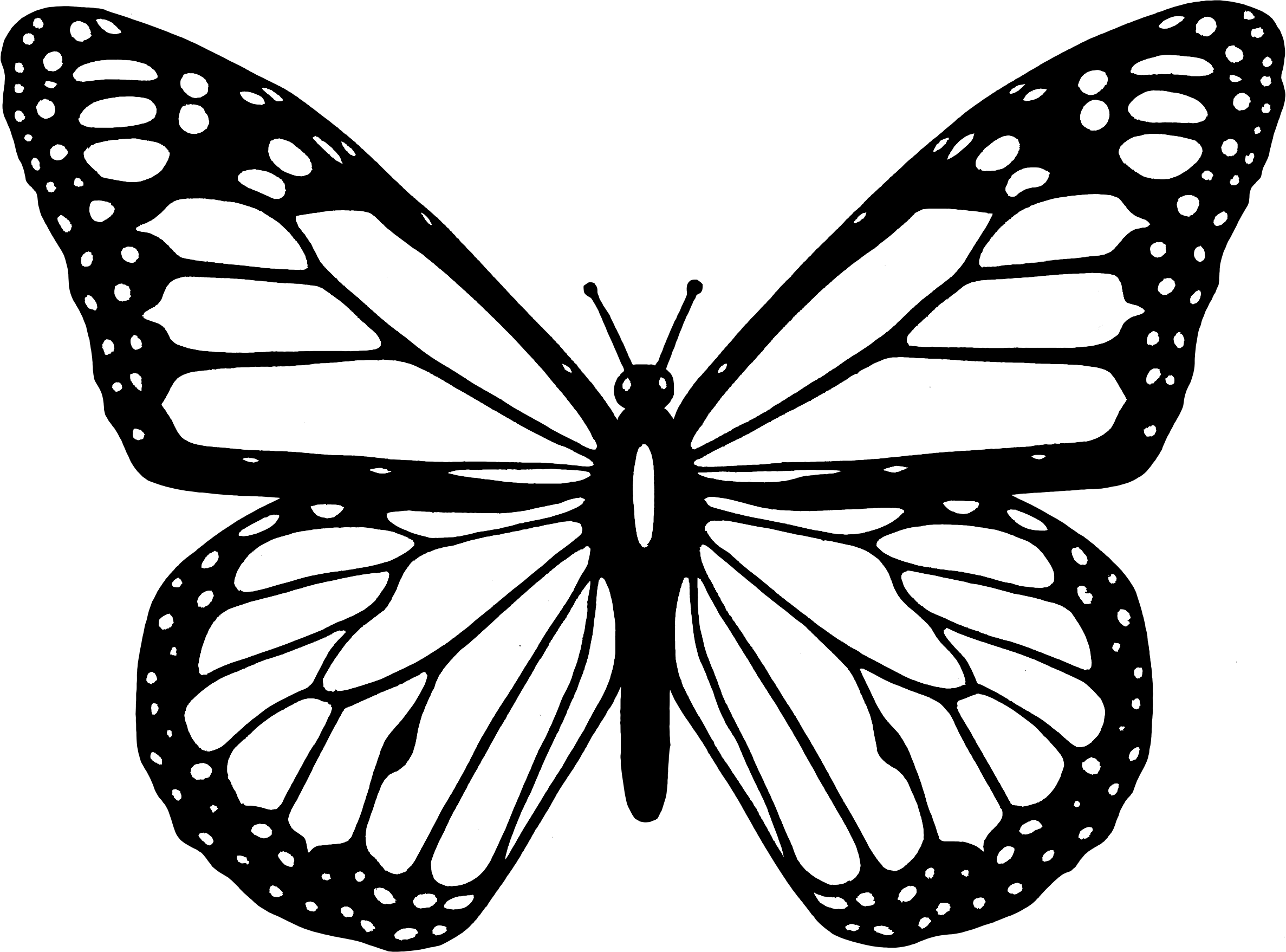Free Butterfly Clipart Black And White Download Free Clip