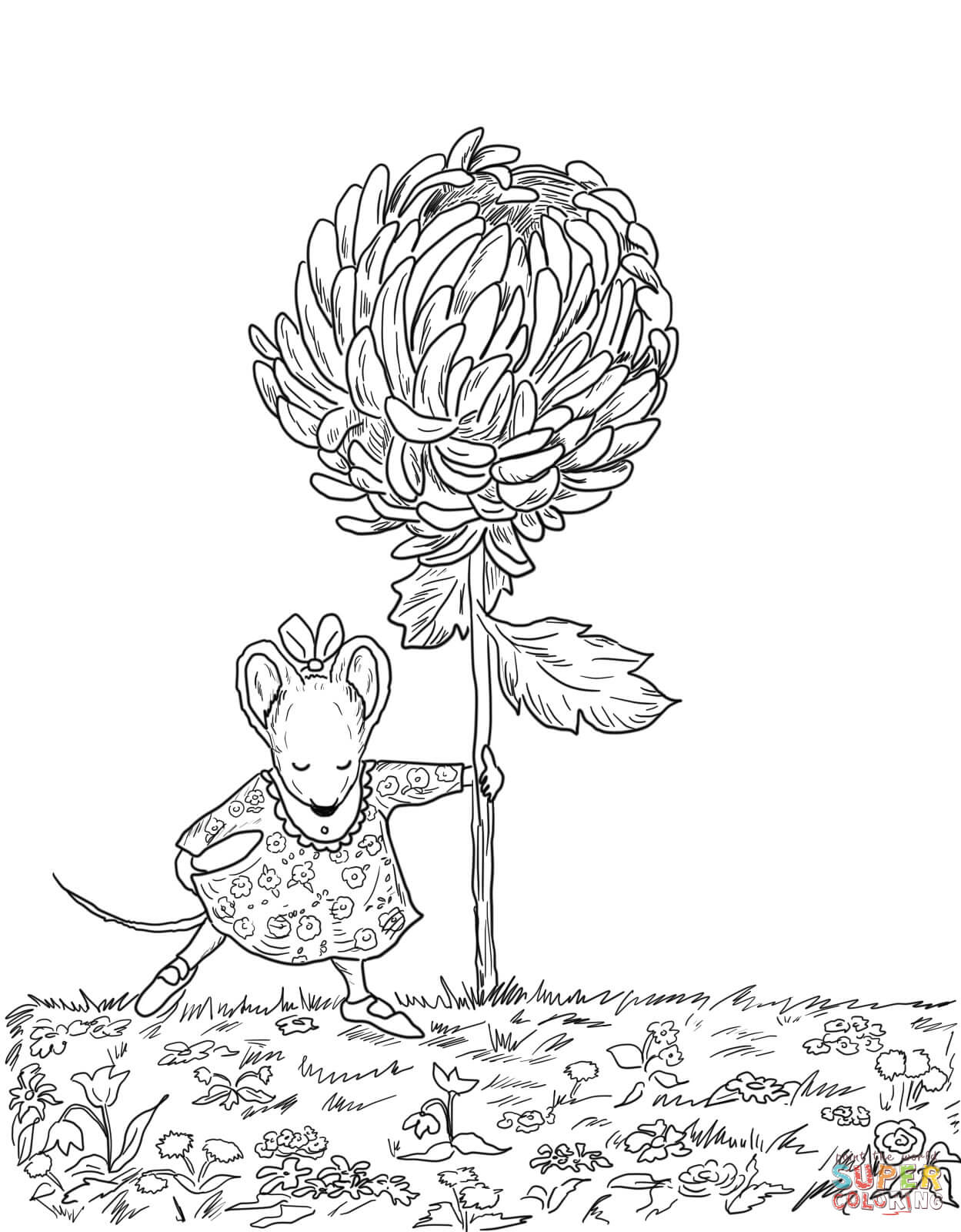 Chrysanthemum Coloring Pages Free Coloring Pages