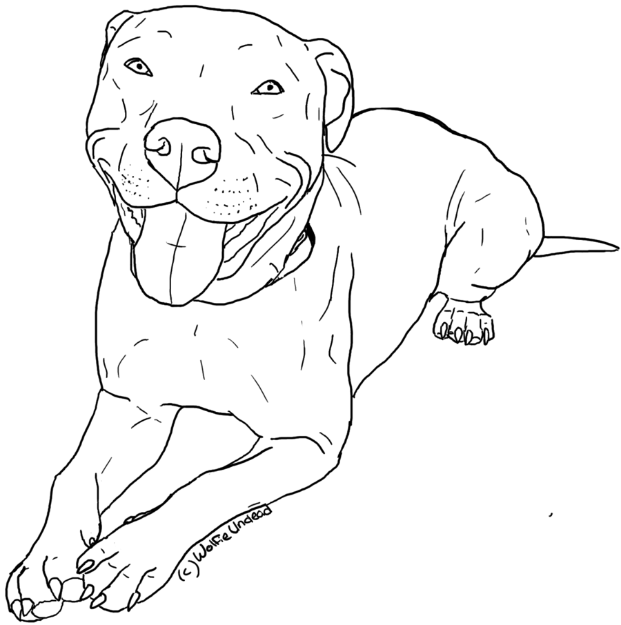 Free Pitbull Coloring Pages Printable, Download Free Clip