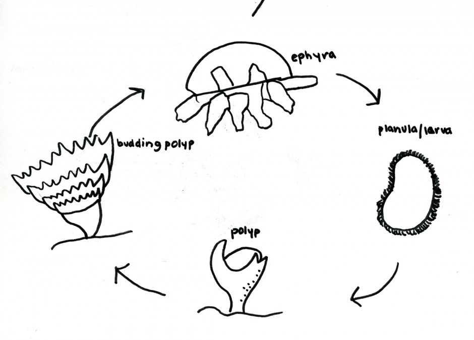 Free Life Cycle Of A Plant Coloring Page, Download Free