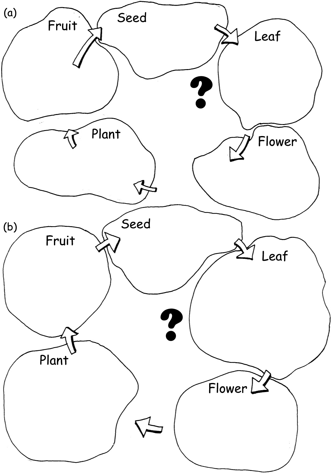 Free Life Cycle Of A Plant Coloring Page Download Free