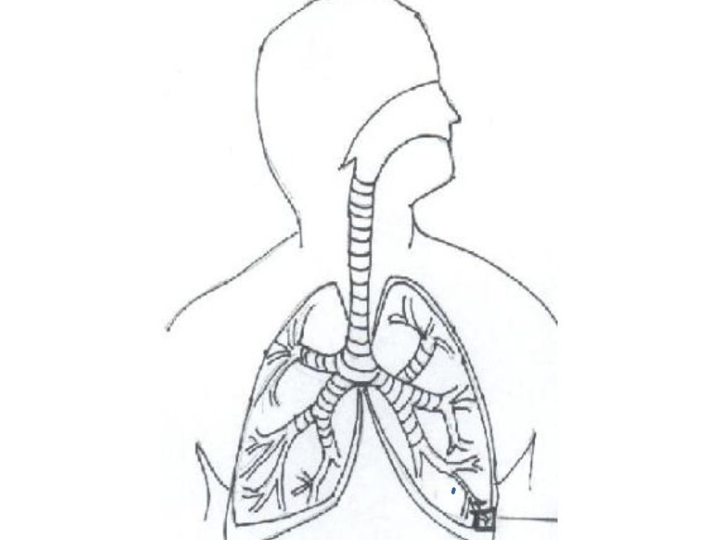 Free Respiratory System Coloring Page Download Free Clip