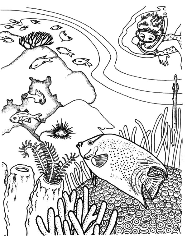 Free Coral Reef Coloring Pages, Download Free Clip Art