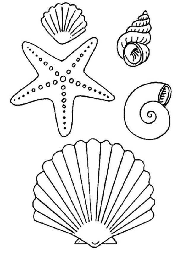 Estrella De Mar Dibujo Clip Art Library