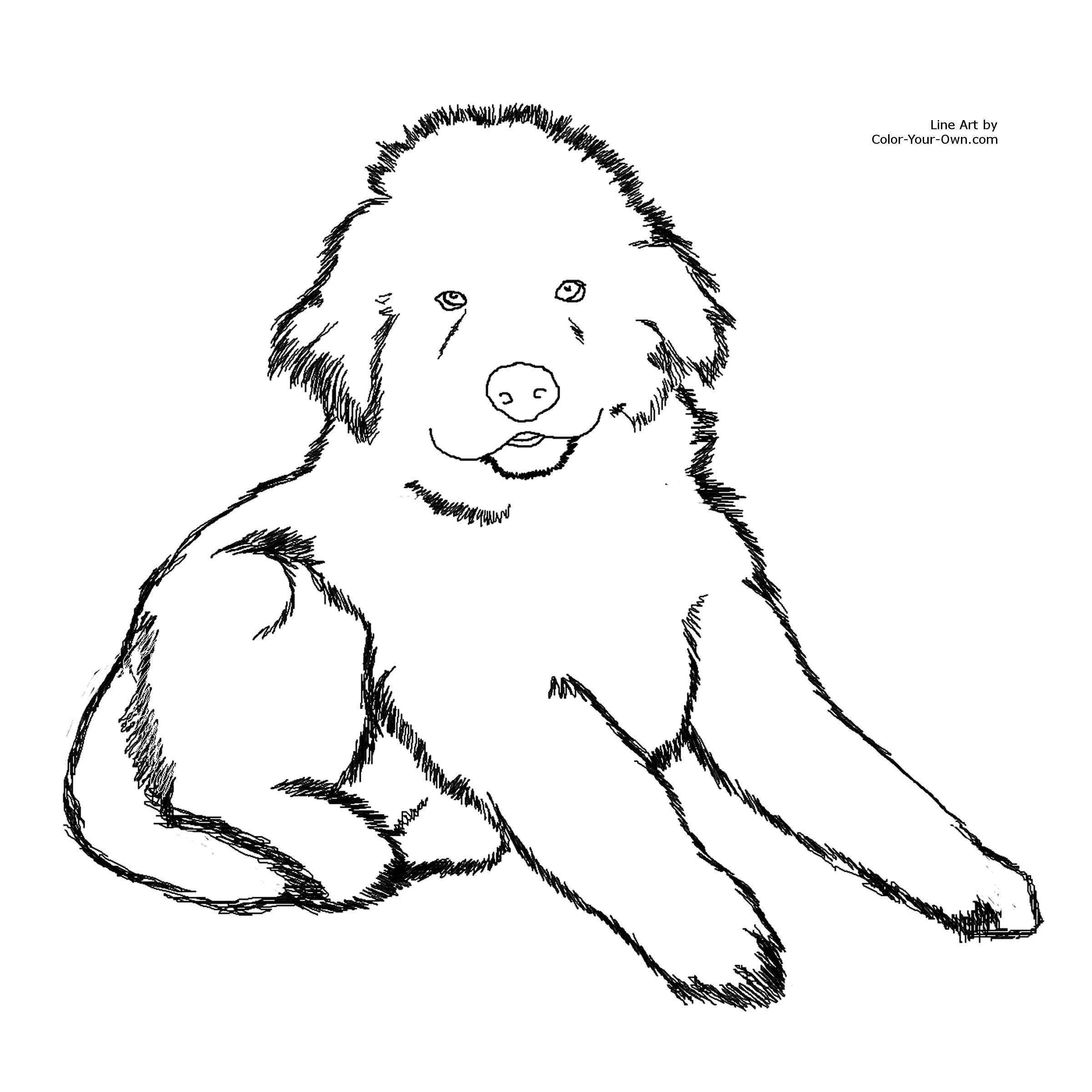 Free Coloring Pages Fluffy Dogs Download Free Clip Art