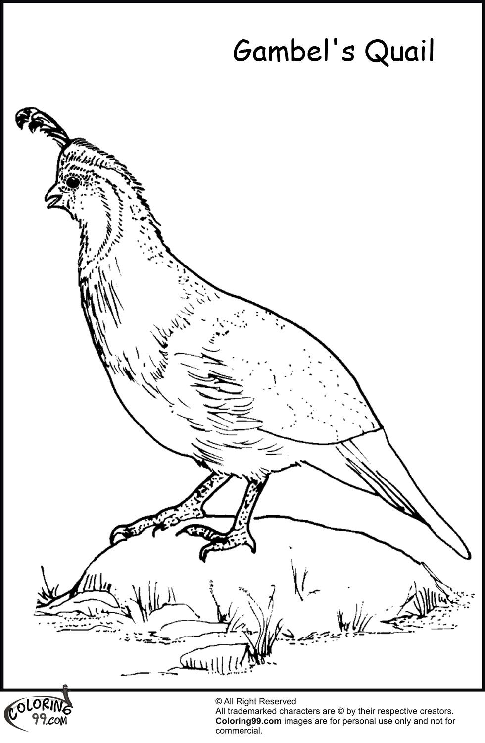 Free Quail Coloring Pages, Download Free Clip Art, Free