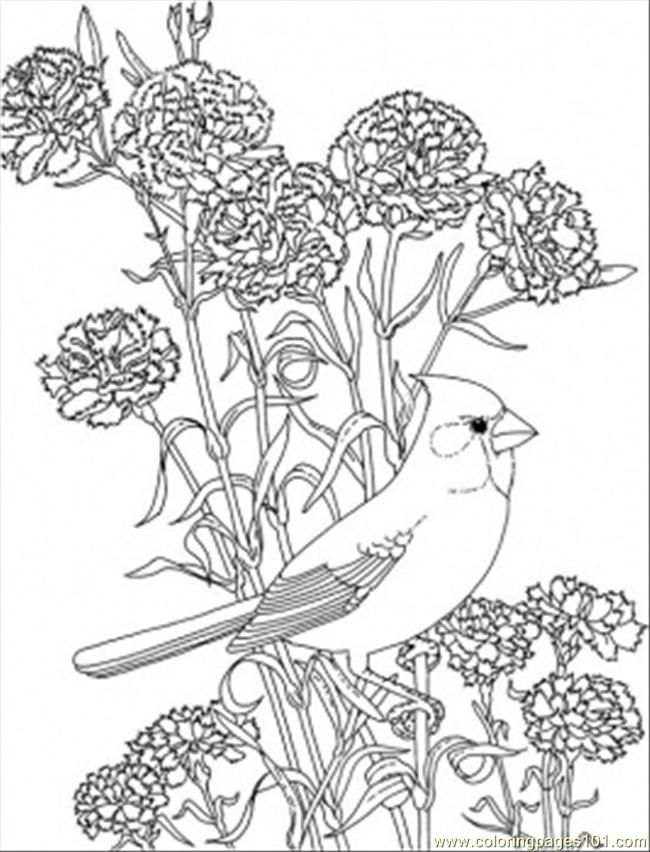 Free Cardinal Coloring Pages Printable, Download Free Clip