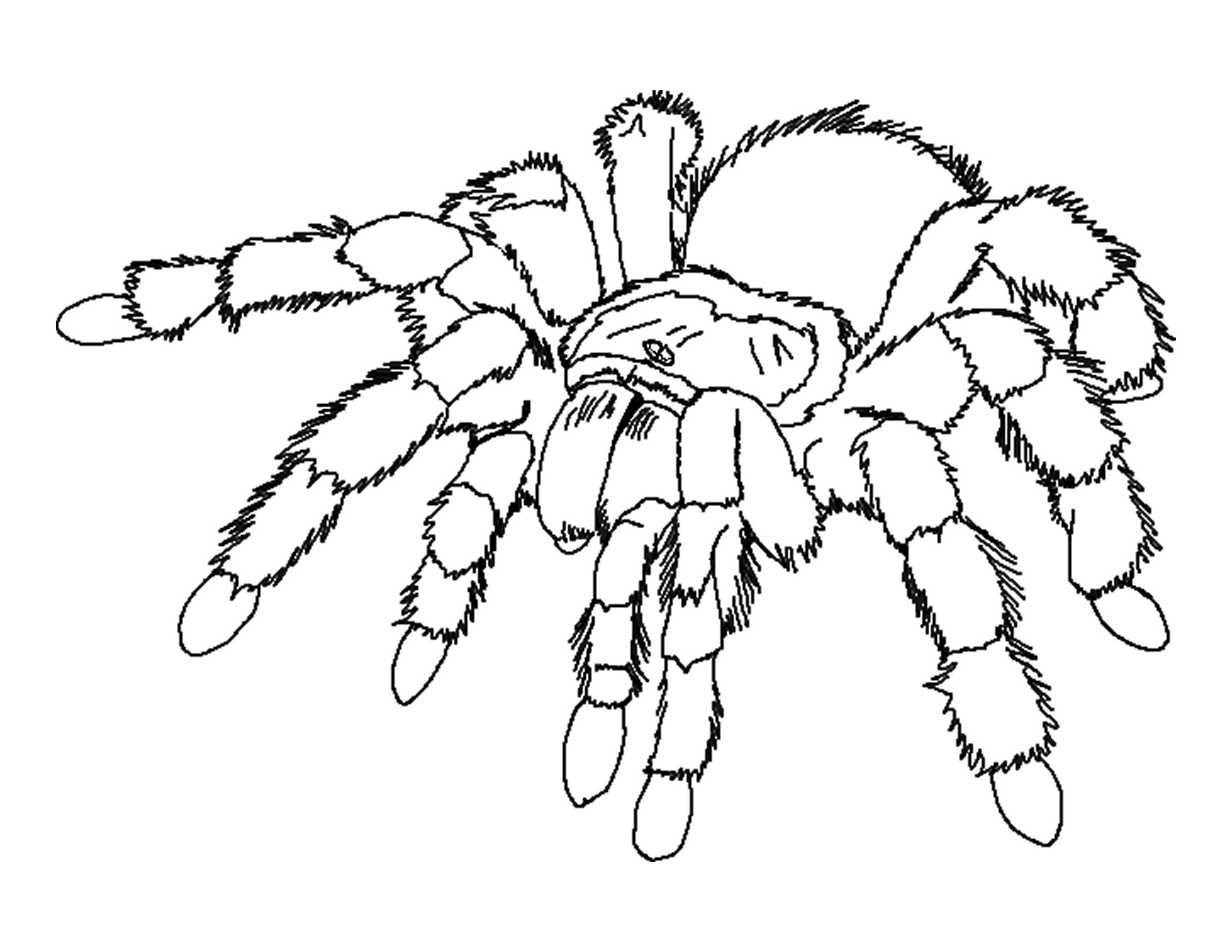 Free Spider Coloring Pages Printable Download Free Clip