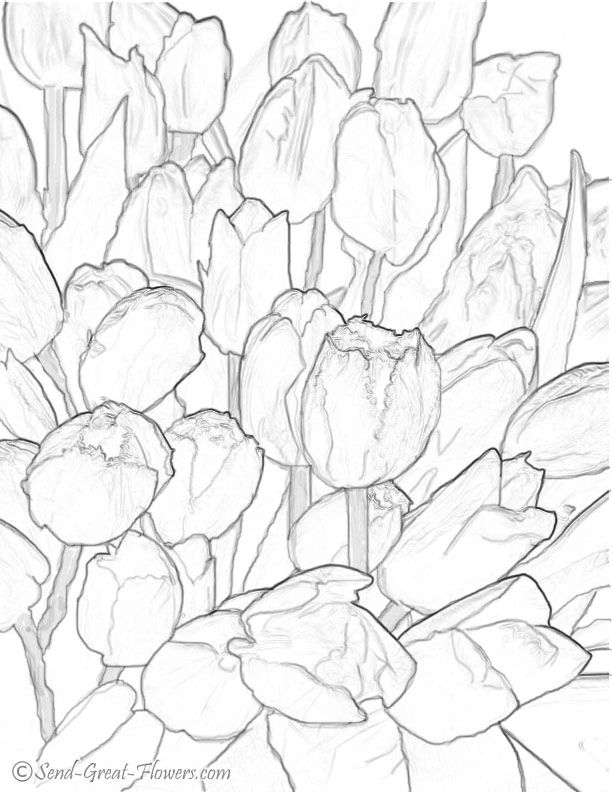 Free Tulip Coloring Pages Download Free Clip Art Free Clip Art On Clipart Library
