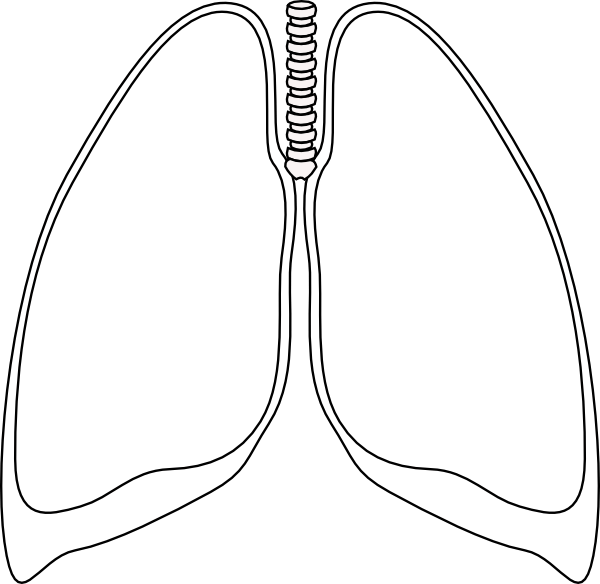 Free Lung Cliparts, Download Free Clip Art, Free Clip Art