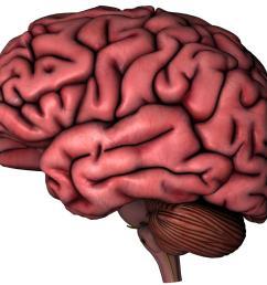 photos of brain drawings clip art brain cartoon clip art [ 2048 x 1351 Pixel ]