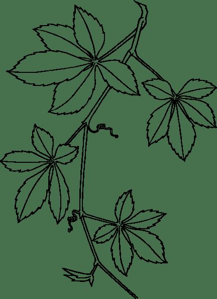 Free Virginia Cliparts, Download Free Clip Art, Free Clip