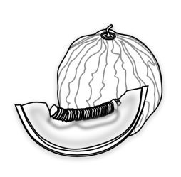 clipart melon clip drawing honeydew cliparts line melons seed coloring musk vector muskmelon svg collection label colouring library squash inkscape